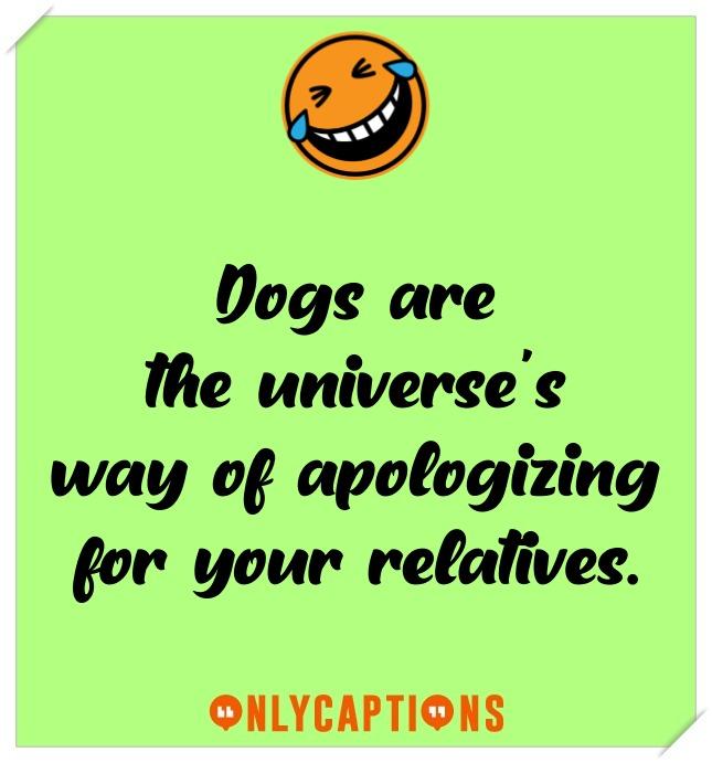 Funny Dog Captions For Instagram (2021)