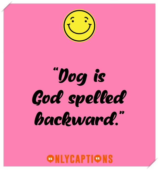 Short Dog Captions For Instagram (2021)