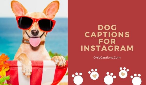 Dog Instagram Captions 2021